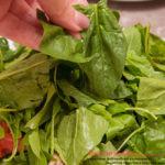 зелень шпината